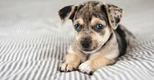 acheter un chien