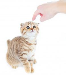 dresser un chat