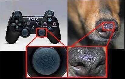 sony nez de chien