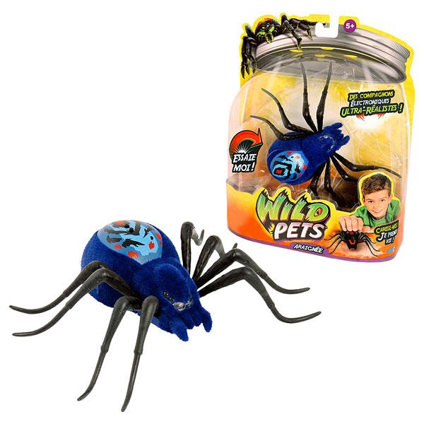 araignée electronique