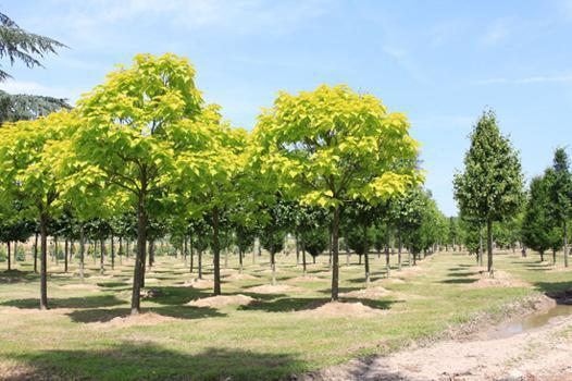 arbre de vente