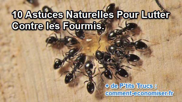 astuce pour fourmis