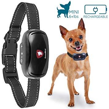 collier anti aboiement rechargeable pour petit chien