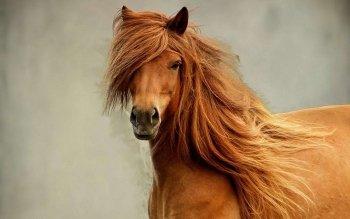 fond decran cheval
