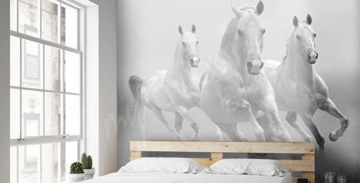 papier peint cheval pour chambre