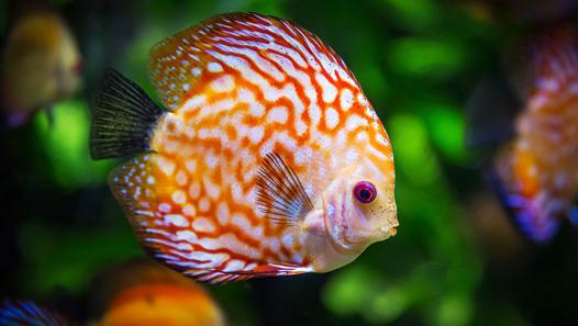 petit aquarium quel poisson
